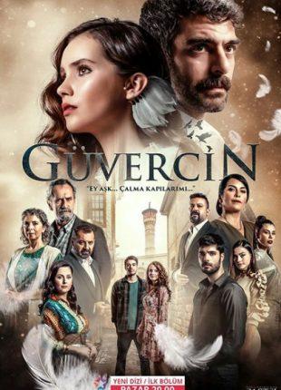 الحمامة Guvercin